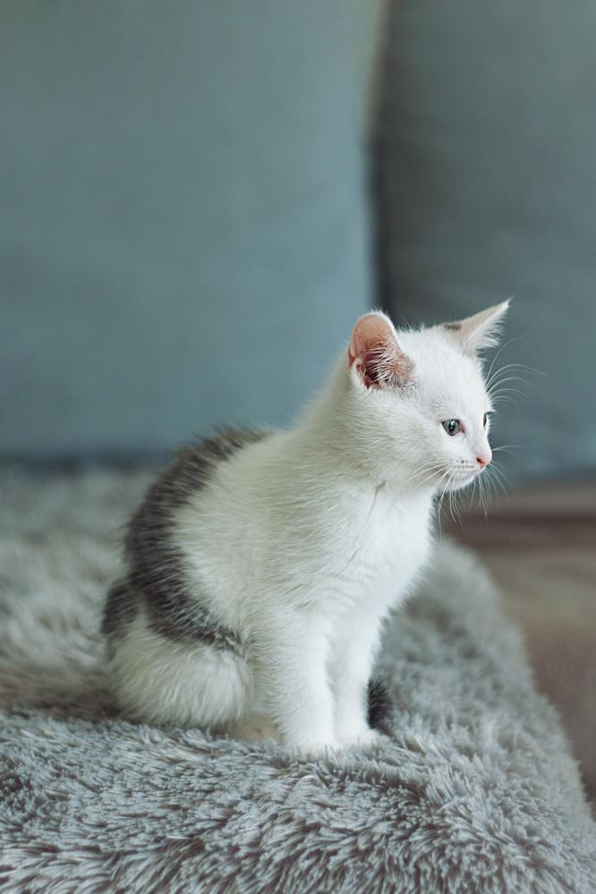 planten die niet giftig zijn voor katten